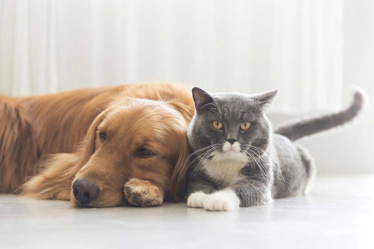 about our veterinary practice  Clarksville, TN